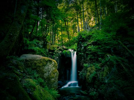 Заставки мох, природа, скалы