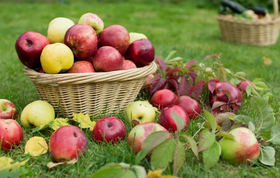 Фото бесплатно природа, листва, яблоки