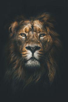 Фото бесплатно лев, дикая природа, природа