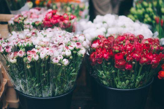 Photo free flower, green, bucket