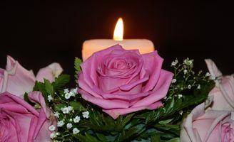 розы и пламя