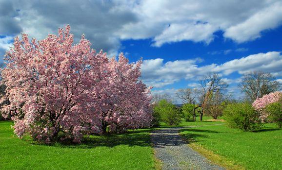 Photo free garden, flower, meadow