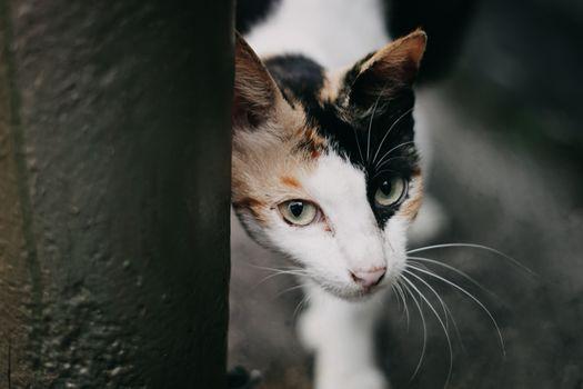Фото бесплатно милый, близко, прекрасный кот
