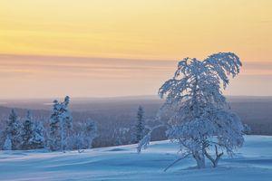Обои Finland, Lapland, Финляндия, Лапландия, зима, снег, деревья, закат, пейзаж