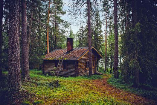 Фото бесплатно лесной массив, деревья, Финляндия