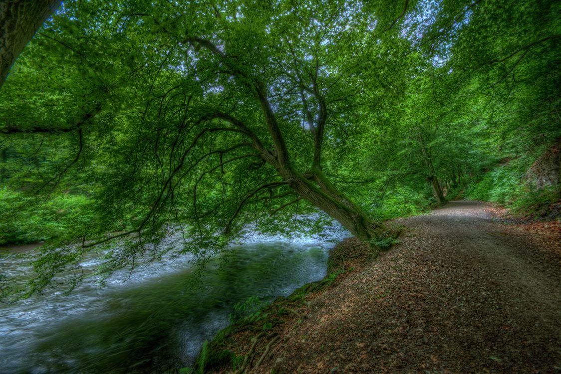 Картинка лес, деревья, дорога, речка, пейзаж на рабочий стол. Скачать фото обои пейзажи