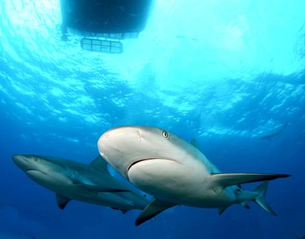 Beautiful pictures of sea creatures, sharks for free