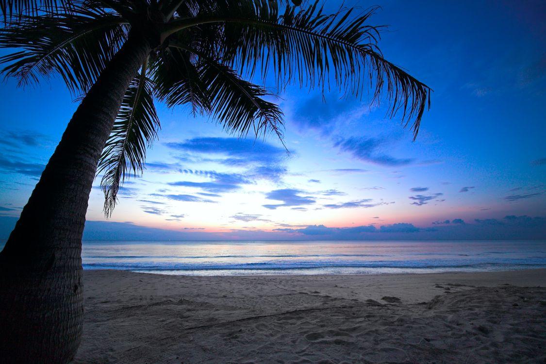 Фото бесплатно закат, море, берег, пляж, пальма, пейзаж, пейзажи
