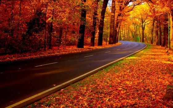 Photo free autumn leaf fall, nature, road