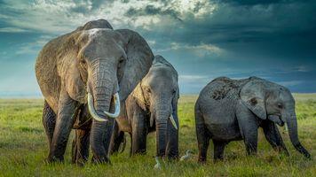 Фото бесплатно Africa, стадо, животные