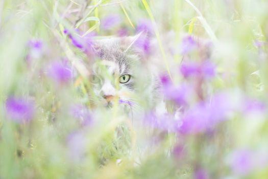 Бесплатные фото кот,природа,животное,зеленый,изобразительное искусство,цвет,красоту,глаза,млекопитающее,цветок,пурпурный,бакенбарды