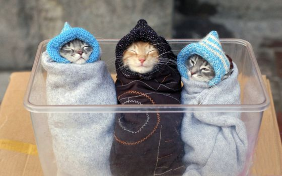 Three kittens wrapped up like babies
