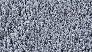 Фото бесплатно деревья, вид сверху, снег