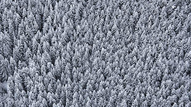 Заставки деревья, вид сверху, снег