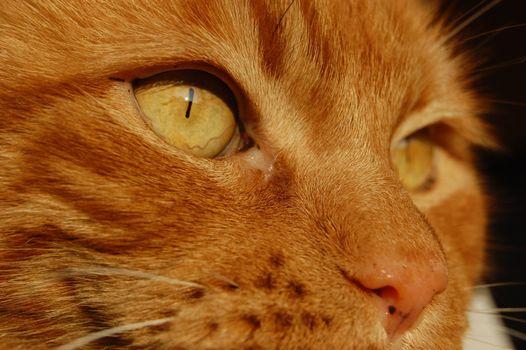 Фото бесплатно кошка, нос, усы