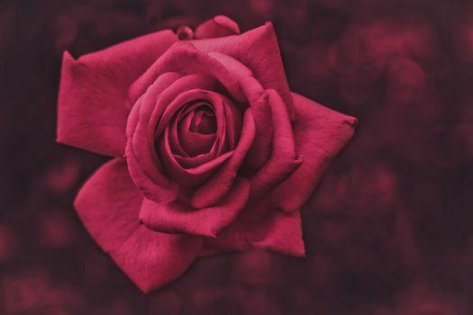 Фото бесплатно роза, бутон, розовый