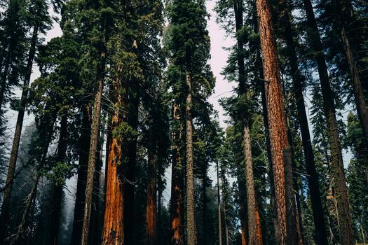 Фото бесплатно умеренный широколистный и смешанный лес, осень, лесной массив