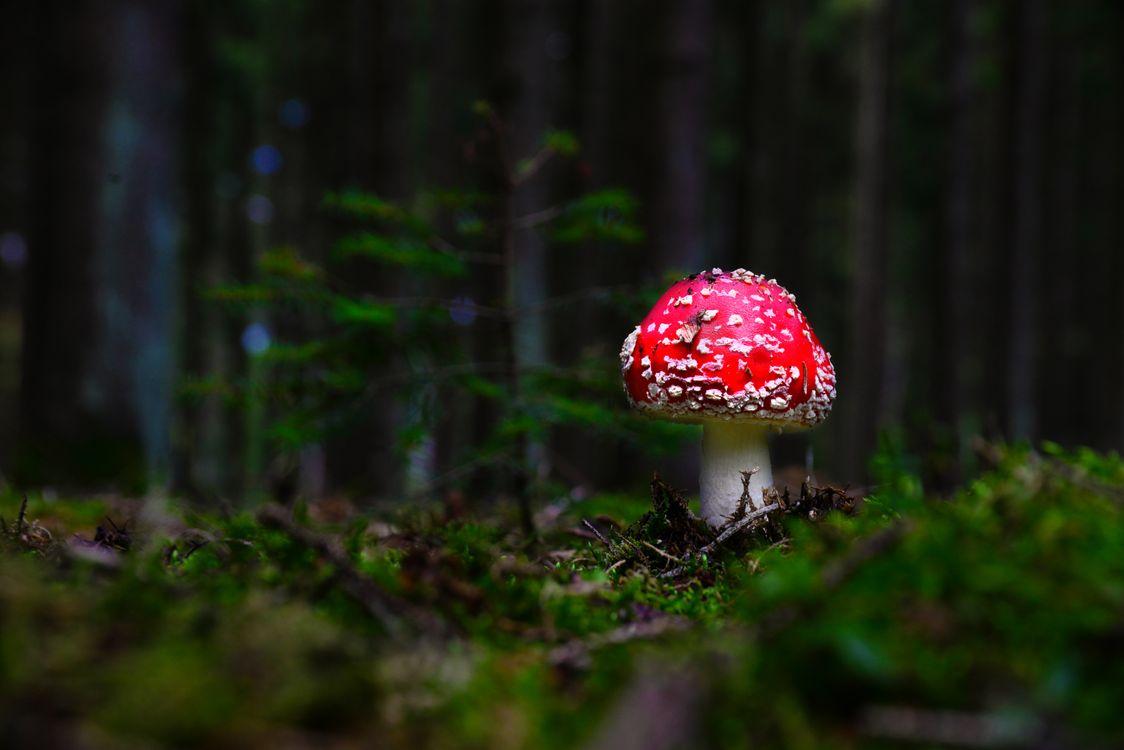 Фото бесплатно природа, мухомор, мох - на рабочий стол