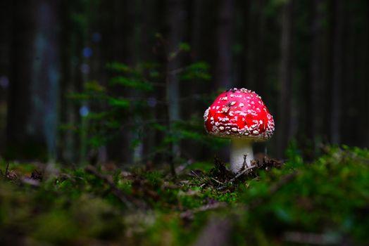 Фото бесплатно природа, мухомор, мох