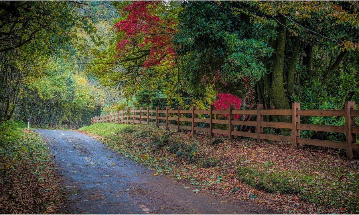 Фото бесплатно осень, лес, деревья, дорога, природа, пейзаж, пейзажи