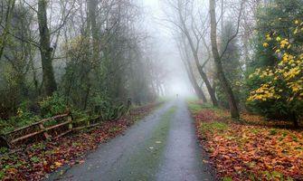Бесплатные фото осень, лес, дорога, деревья, туман, природа