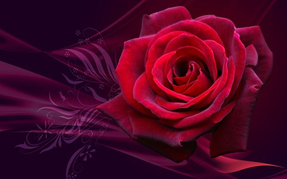 Photo free flower, flora, wallpapers