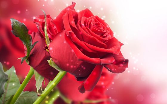 Заставки роза, светящиеся, огоньки