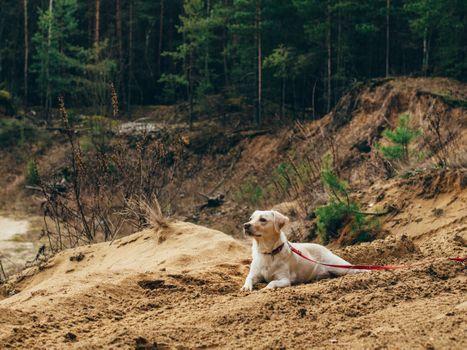Photo free dog, lying down, sand