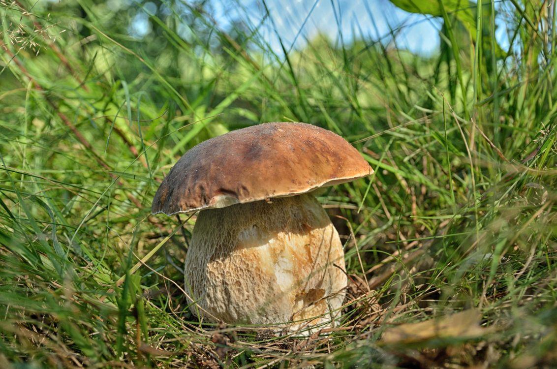 Фото бесплатно гриб, белый, белый гриб - на рабочий стол