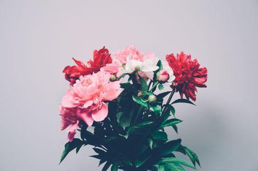 Фото бесплатно цветок, растение, букет