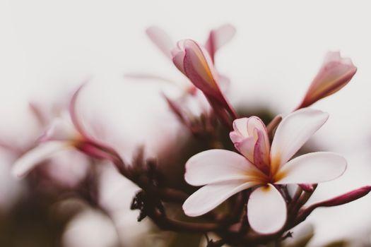 Фото бесплатно розовые цветы, весна, близко