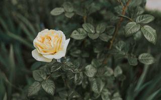 Фото бесплатно растение, цветок, лист