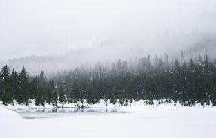 Бесплатные фото зима,снег,обои,com2500,лес,вечнозеленый,сосна