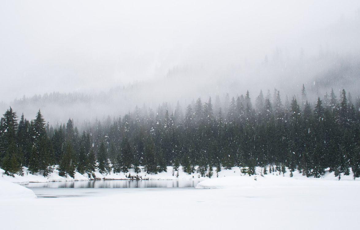 Фото бесплатно зима, снег, обои, com2500, лес, вечнозеленый, сосна, ель, туман, облако, озеро, дерево, пейзажи