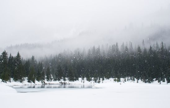 Бесплатные фото зима,снег,обои,com2500,лес,вечнозеленый,сосна,ель,туман,облако,озеро,дерево