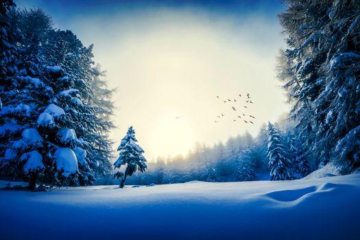 Фото бесплатно зима, стая птиц, пейзаж