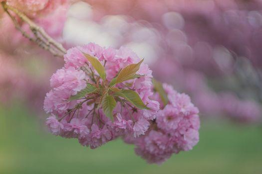Фото бесплатно Красивый цветок, цветочная ветка, цветущий