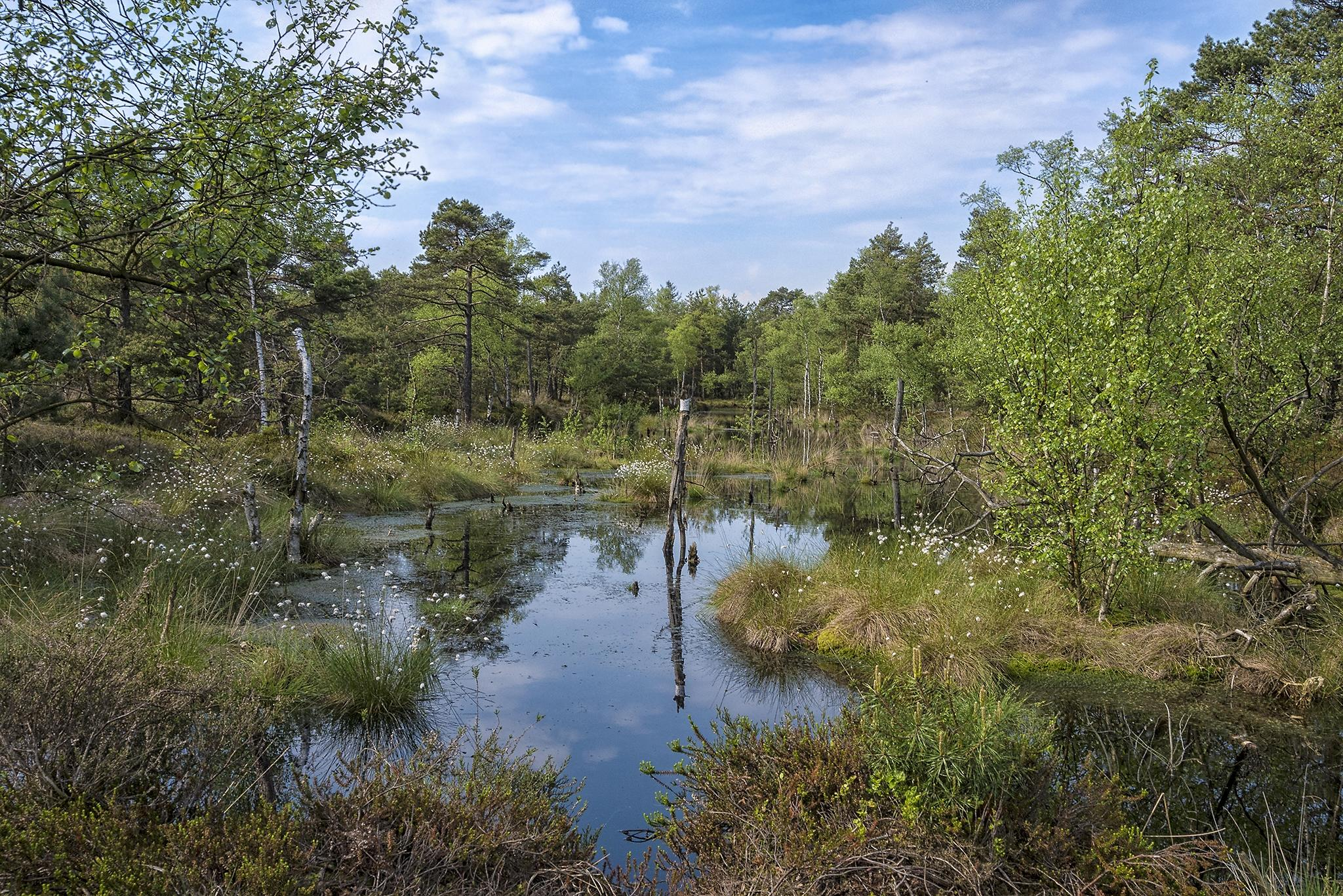 Обои болото, водоём, деревья, природа