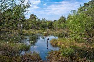 Photo free swamp, pond, trees
