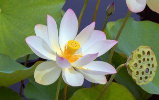 Фото бесплатно красивые, цветы, пруд