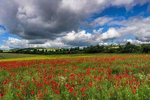 Фото бесплатно поле, деревья, цветы, небо, облака, маки, пейзаж