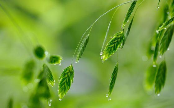Фото бесплатно листья, капли воды, близко