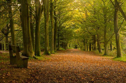 Фото бесплатно скамейка, лес, сад