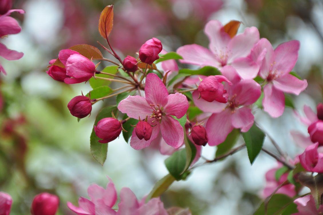 Цветущие сады сакуры · бесплатное фото