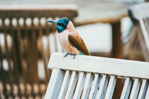 Photo free bird, standing, long beak