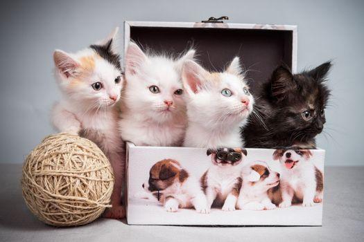 Фото бесплатно маленькие котята, домашние животные, котята