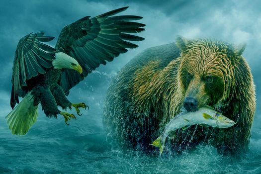 Bald eagle wants to take away from the bear the fish