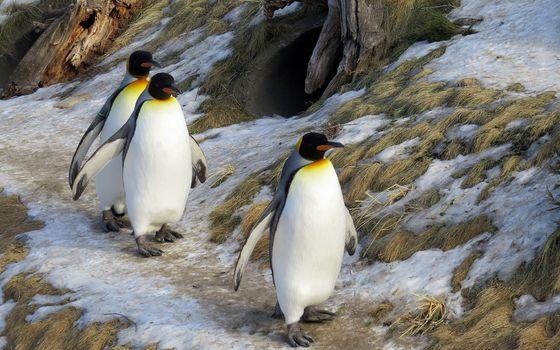 Фото бесплатно птицы, пингвины, животные