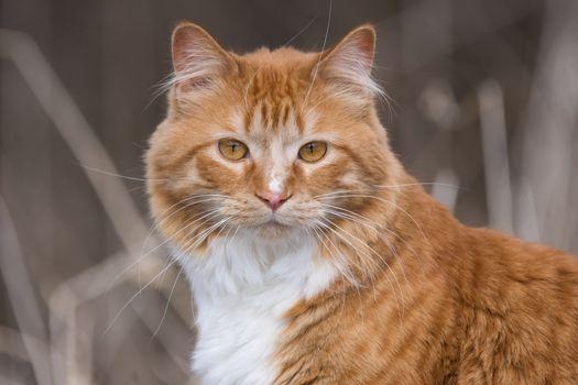 Фото бесплатно симпатичная кошка, морда, просмотреть
