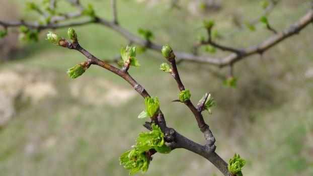 Photo free twig, flower, produce